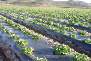 catálogo y venta de acolchado agrícola en México